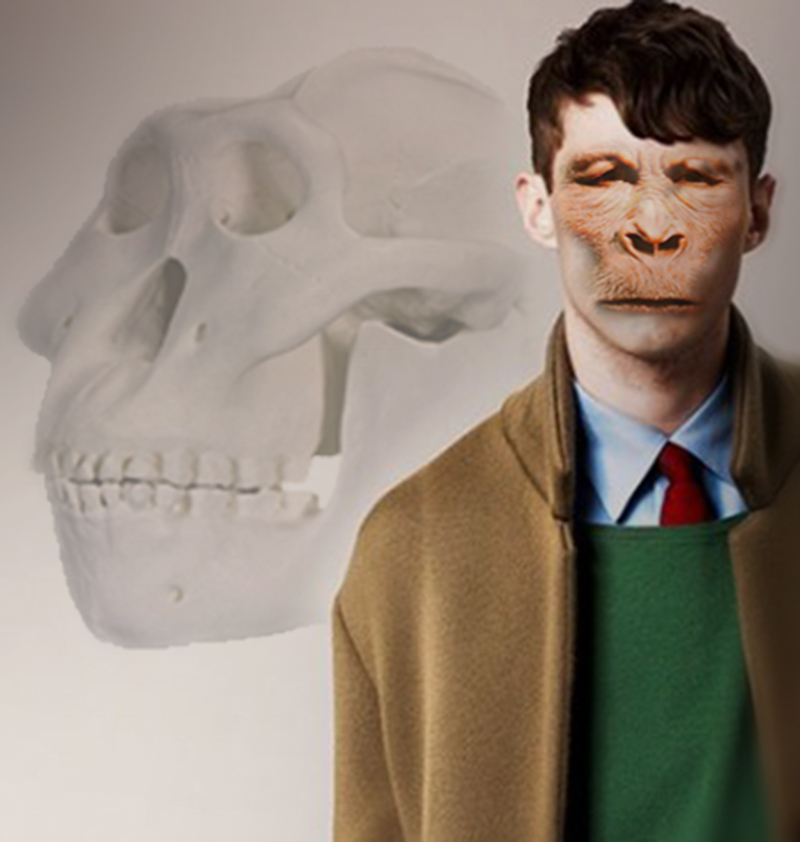 Paranthropus boisei indossa Burberry